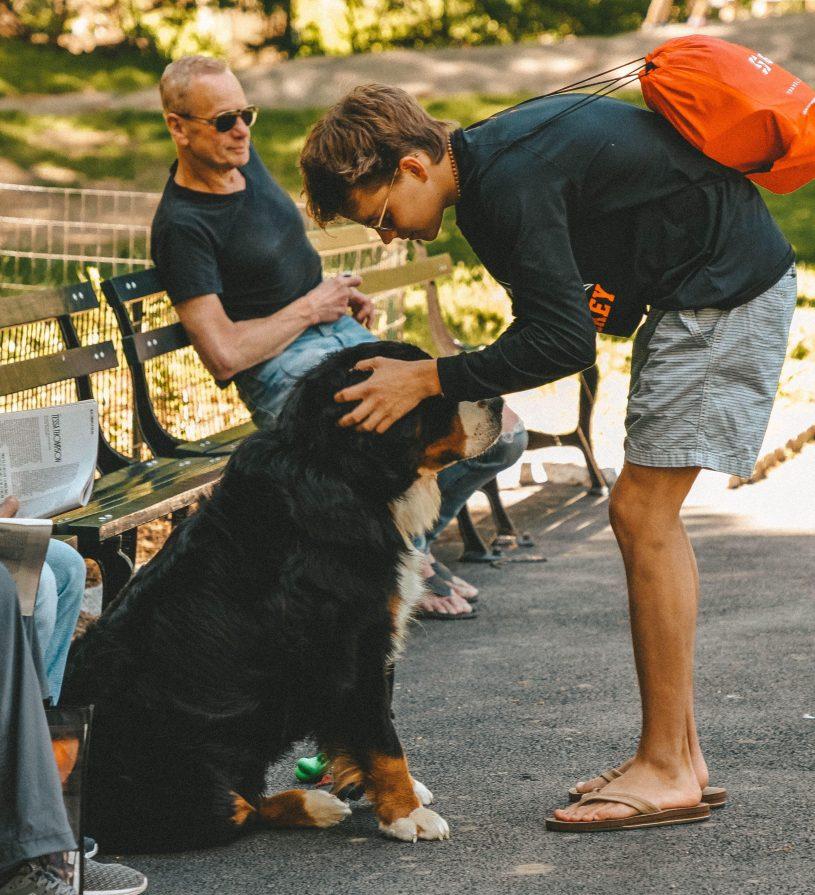Blog gesundheit hund